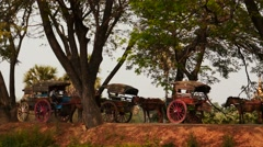 Stock Video Footage of Horses with harnessed carriages in Myanmar village waiting for tourists