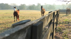 Georgia Horse Farm Ranch Wrack Focus Stock Footage