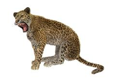 Big Cat Leopard on White - stock illustration