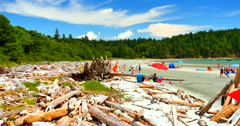 4K West Coast Beach, Logs Piled up in Front of Trees, People in Background Stock Footage