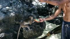 KO PHI PHI, THAILAND: Man feeding two cute hungry monkey baby. Stock Footage