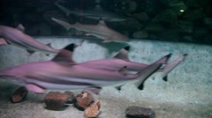 Under water shot of a large group of sharks swimming together Stock Footage