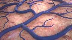 Capillary on the brain surfase Stock Footage