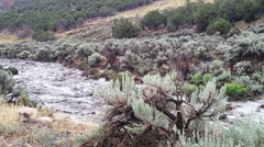 Flash flood rages down sagebrush lined stream channel - stock footage