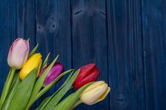 Tulip flower bouquet Stock Photos