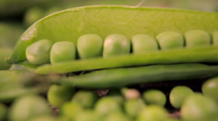 In the movement of the focus along the for clothes a pea in the pod Stock Footage
