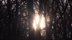 Sunrise in the winter forest Stock Footage