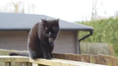 Black Cat Sitting On A Fence, Beautiful Pet In The Garden, Self Cleaning Coat - stock footage