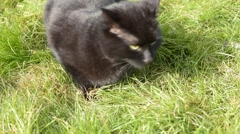 Black Cat Sitting In The Green Grass, Is Startled And Runs Away Stock Footage