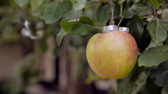 wedding rings in white gold on the apples - stock footage