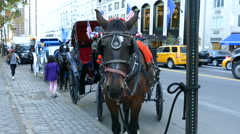 Horse and carriage ride in Manhattan, New York City Stock Footage