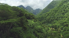 AERIAL: Dense acacia and palm trees forest in mountain jungle Stock Footage