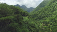 AERIAL: Dense acacia and palm trees forest in mountain jungle - stock footage