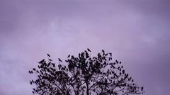 Birds Fly From Tree Stock Footage