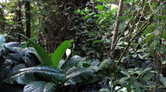 4k Tropical palms and plants in jungle panning Stock Footage