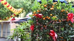 Kumquat tree decorated for Chinese New Year with Chinese lanterns in background. - stock footage