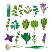 Cooking Herbs Collection - stock illustration