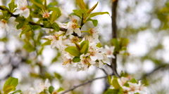 Fresh spring flowers footage Stock Footage