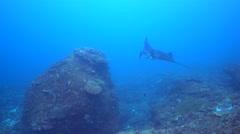 Manta ray (Manta blevirostris) swimming very close Stock Footage