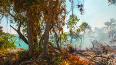 Phuket island fire burning tree panorama 4k time lapse thailand Stock Footage