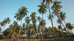 thai famous island palm tree place panorama 4k time lapse thailand - stock footage