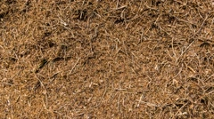 Anthill in a forest Stock Footage
