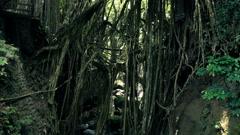 People walking on bridge in Monkey Forest in Bali - stock footage