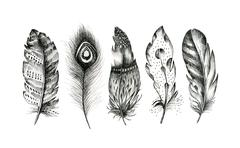 Stock Photo of set of hand drawn feathers on white background. Boho decoration