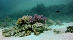 Snorkeling, Diving, Aqua Fish of the coral reef. - stock footage