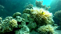 Lagoon, Diving, Submarine life.  The world under water. Sea, Reef, - stock footage