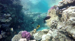 Coral flowers. Under water. Coral, Sea, - stock footage