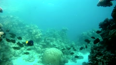 The world under water. The corals and fish. Under water. Tropical fish. - stock footage