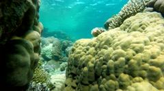 Diving in the ocean. Coral reef.  Exotic fishes. - stock footage