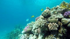 Beautiful coral reef. Clear water. - stock footage