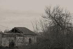 ruin overgrown vegetation - stock photo