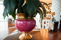 large premium vase with green flower - stock photo