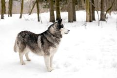 Faithful dog is waiting Stock Photos