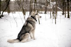 Faithful dog and snow Stock Photos