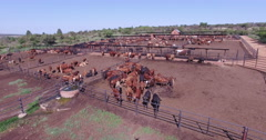 Aerial view of cattle in feedlot Stock Footage