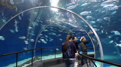 China tourism, people walk through glass tunnel, swimming fish, blue water Stock Footage