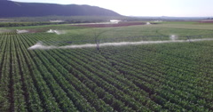 Aerial view of corn fields being irrigated with centre pivot system - stock footage