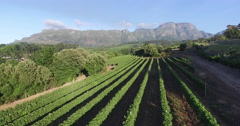 Aerial view of picturesque vineyard with mountains in the background Stock Footage