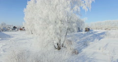 Aerial: morning in a winter forest.. Frozen Birch tree with frost at winter Stock Footage