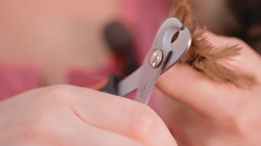 A woman is cutting a dog's nails Stock Footage