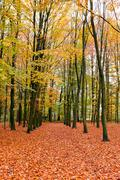 Fall in the forest in the Netherlands - stock photo
