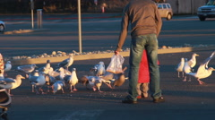 Seagulls being fed by a person - stock footage