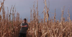 Farmer inspecting corn crop devastated by drought Stock Footage