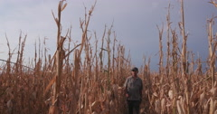 Farmer using digital tablet while inspecting corn crop devastated by drought Stock Footage