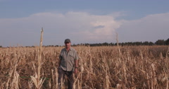 Stock Video Footage of Farmer inspecting corn field devastated by drought and hail