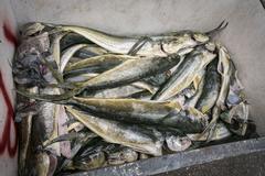 Prepared Fish in a Fish Market Stock Photos